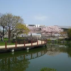 家原大池公園 / ( 周辺 )